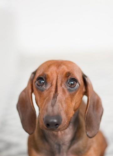 legjobb kutyanevek tacskóknak