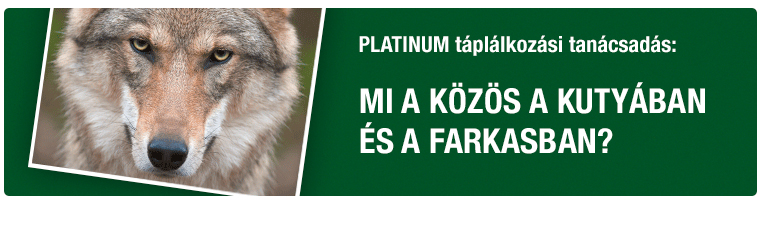 PLATINUM Tanácsadás - Mi a közös a kutyában és a farkasban?