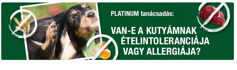 PLATINUM Tanácsadás - Van-e a kutyámnak  ételintoleranciája vagy allergiája?