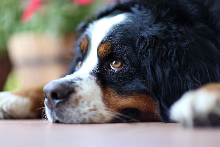 Unatkozó kutya – 5 jel, hogy a négylábúnak több aktív időtöltésre lenne szüksége