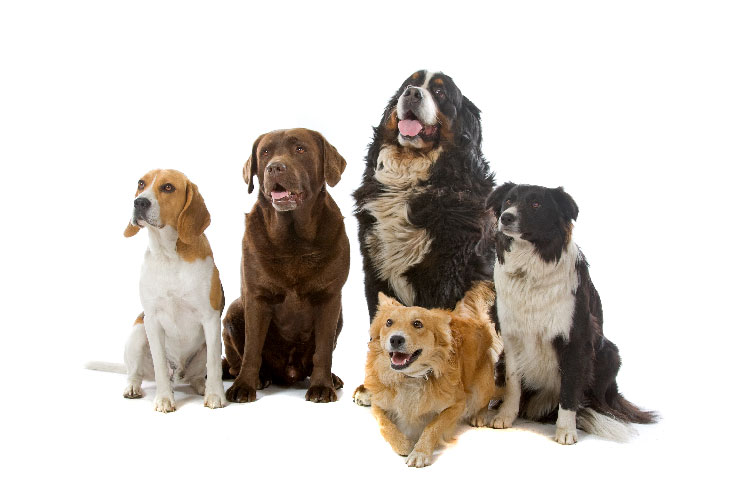Milyen kutya illik hozzám? – Szempontok, amiket át kell gondolnunk, mielőtt bővül a család