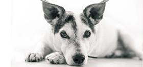 Kutya örökbefogadás: kérdések, válaszok, tanácsok