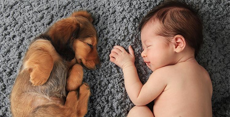 Kutya-gyerek kapcsolat