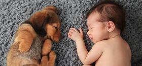 Kutya-gyerek kapcsolat: Így készítsd fel a kutyádat, ha gyerek érkezik a házhoz