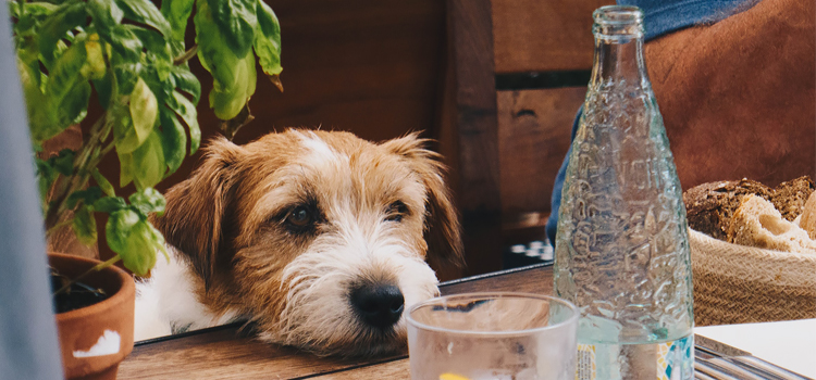 Dehidratáció kutyáknál: mit tehet a gazdi, hogy megelőzze?