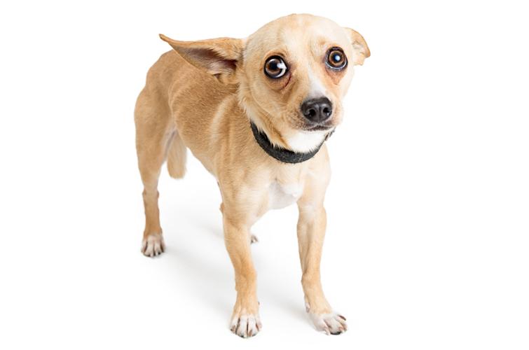 Miért félős a kutya, avagy milyen okok állnak a háttérben?