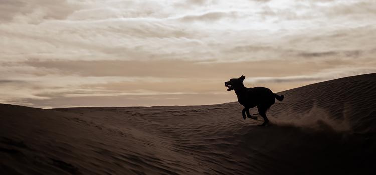Futás kutyával együtt