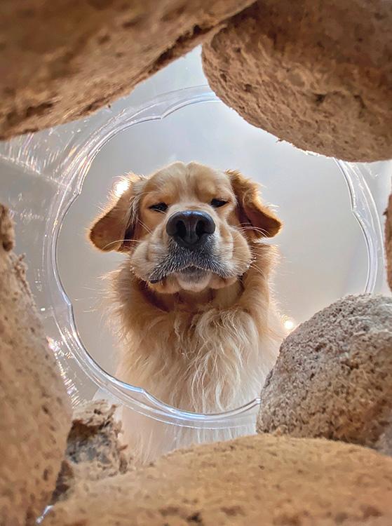 A pillanat, amikor ráébredsz, hogy a kutyád egy fél doboz kekszet meg fog enni.