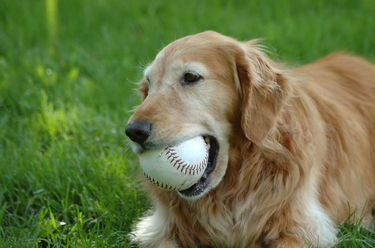 Keresőjáték, bújócska, vagy labda?