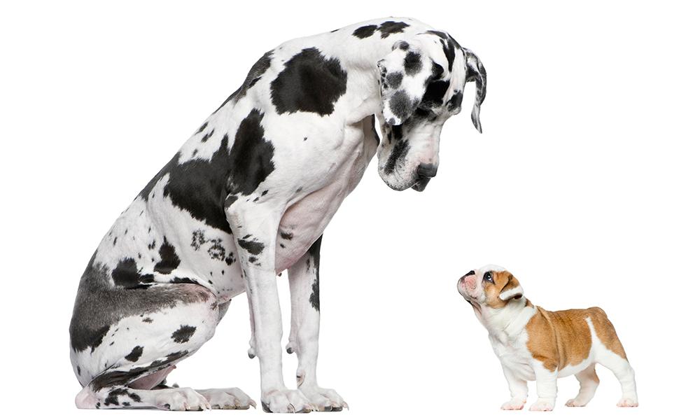 Kistestű, nagytestű kutya