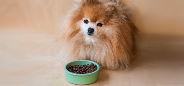 kutya etetése táblázattal