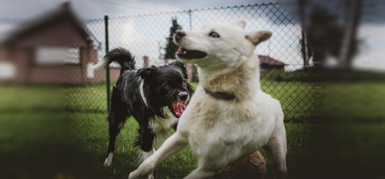 engedetlen kutya megnevelése