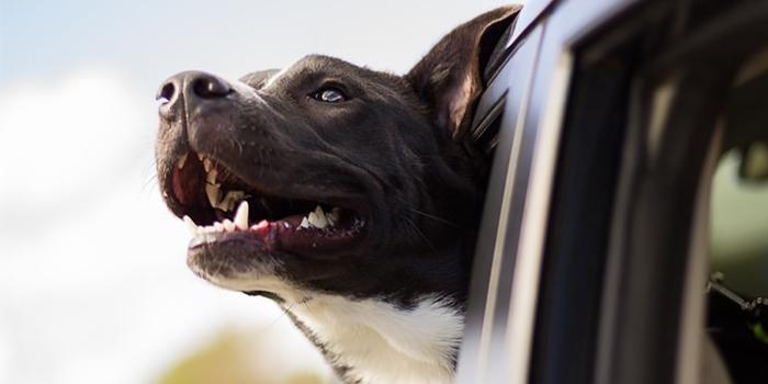 kutya szájszag fogkövességtől