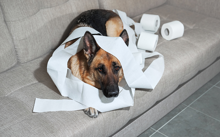 kutya szobatisztaság