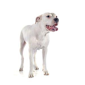 kutyafajta képekkel