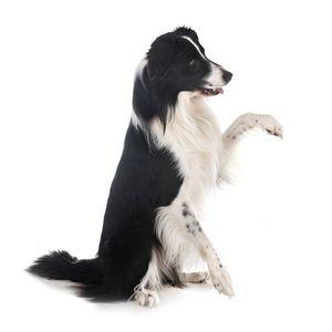 legokosabb kutyafajta