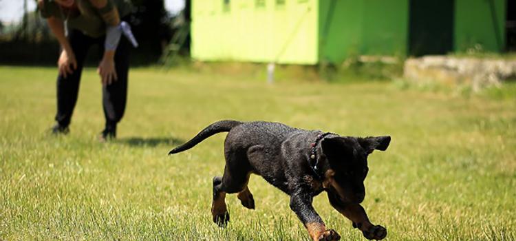 kutyatartás felelősen