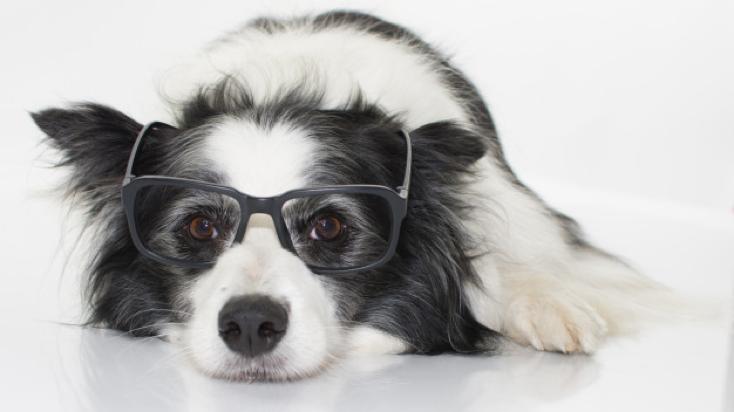 legokosabb kutya a világon