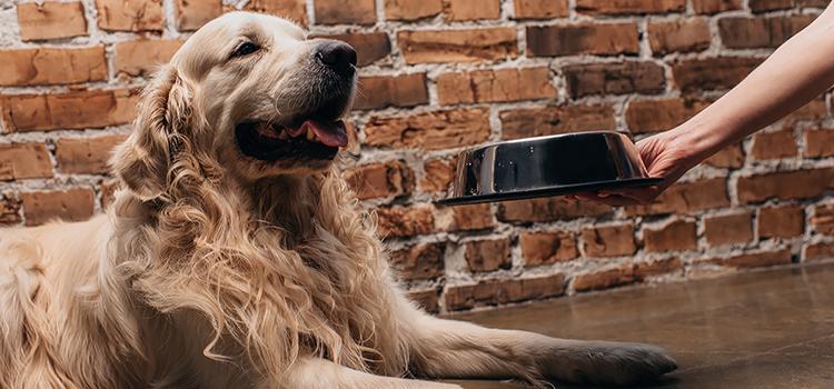 miért nem eszik a válogatós kutya