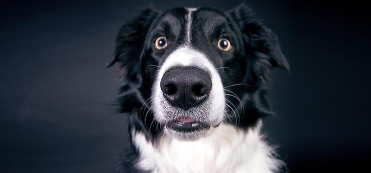 Mégis mennyi a kutyám IQ-ja?