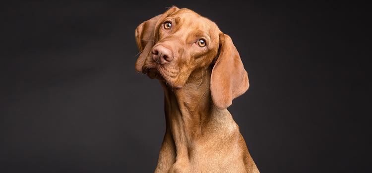Okos, okosabb, legokosabb, avagy mennyi a kutya IQ-ja?