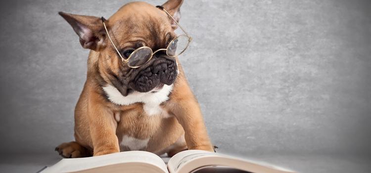 mennyire okos a kutyusom?