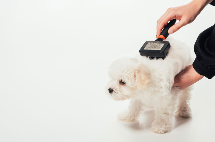 Mitől vedlik a kutya?