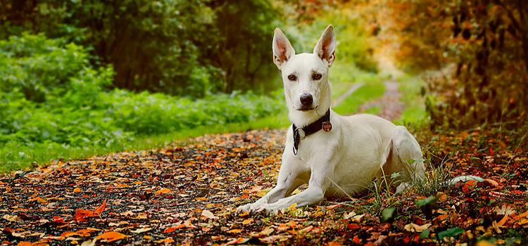 Őszi túrázás kutyával