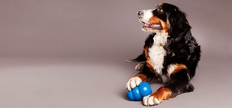 válogatós kutya szindróma