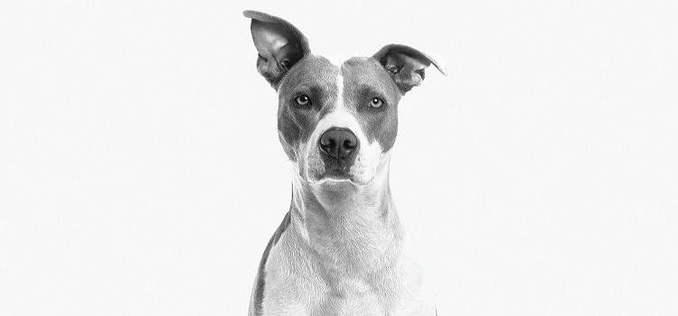 Gyanakvó kutya