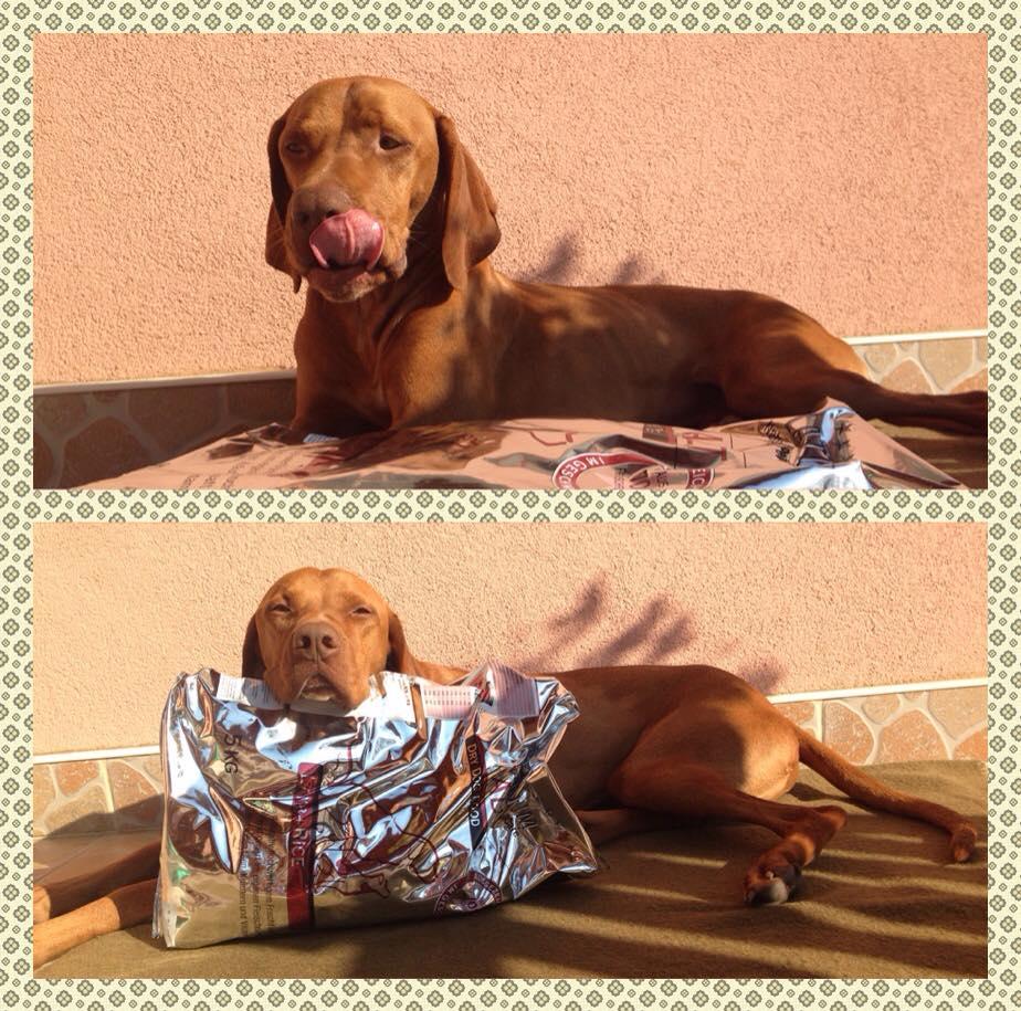 Juhász Annamária és kutyája Ardó véleménye