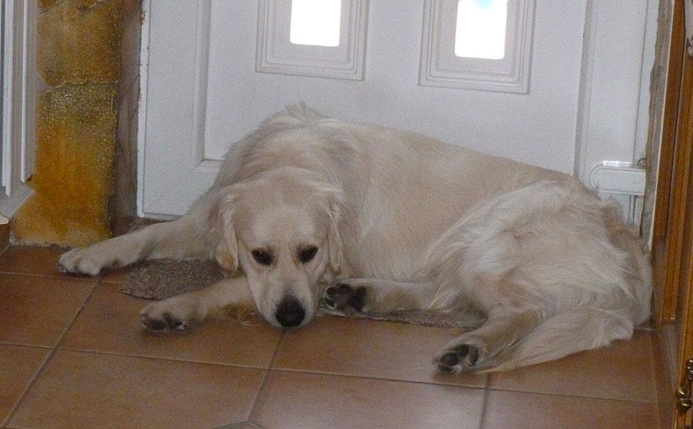 Lehoczky Lívia labradorja Zeusz