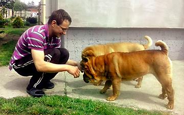 Szabó Norbert és kutyái, Phaeton és Junior