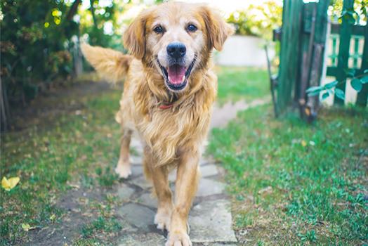 Prémium kutyatáp egyedi receptúra szerint