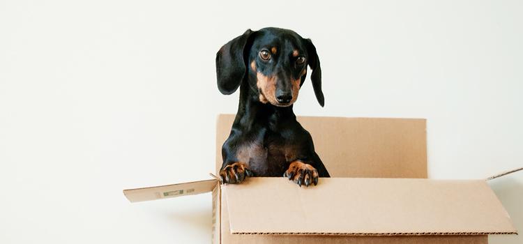 Prémium kutyatáp rendelés