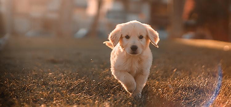 speciális kutyatáp, speciális kutyaeledel