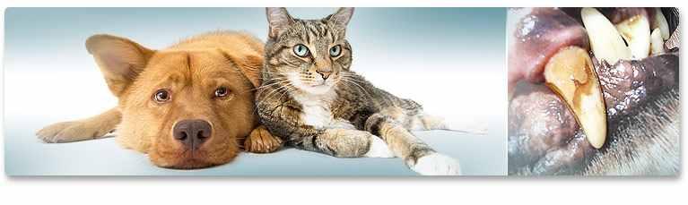 Fogkő kutyáknál és macskáknál