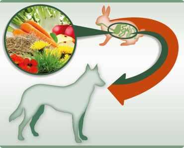 A természetes állati- ás növényi alapanyagok optimális kompozíciója