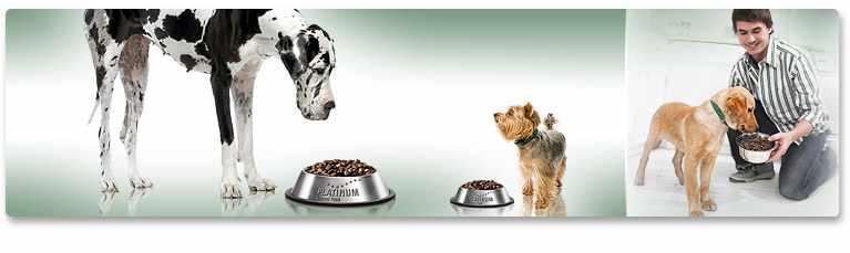 Etetési javaslat felnőtt kutyák számára
