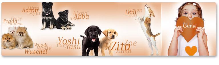A nagy PLATINUM kutyanév lexikon
