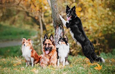 Kutyaeledel számos pozitív tulajdonsággal