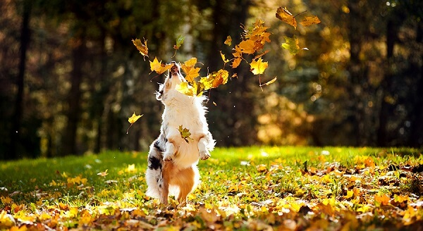 PLATINUM száraz kutyatápok - Tedd boldoggá kutyád!