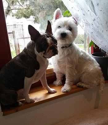 Csery Gyöngyi véleménye a PLATINUM kutyatápról