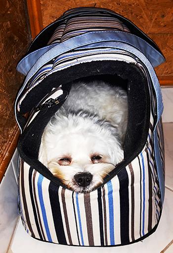 Erika és Toby véleménye a PLATINUM kutyatápról
