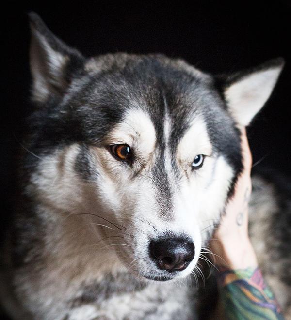 Kovács Martin és Dante véleménye a PLATINUM kutyatápról