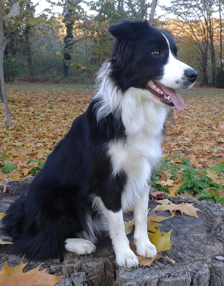 Szegi Ágnes véleménye a PLATINUM kutyatápról