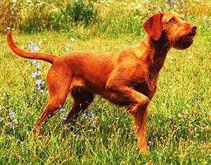 Vida Noémi ls Menta véleménye a PLATINUM kutyatápról