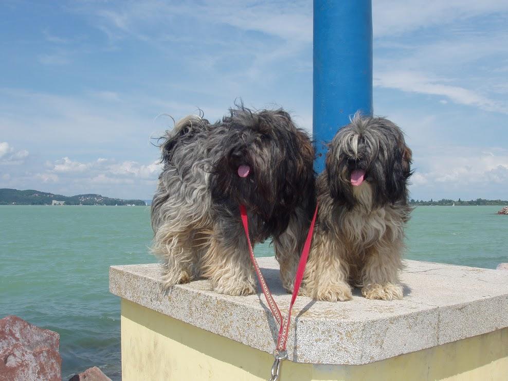 Gulyás Judit véleménye a PLATINUM kutyatápról