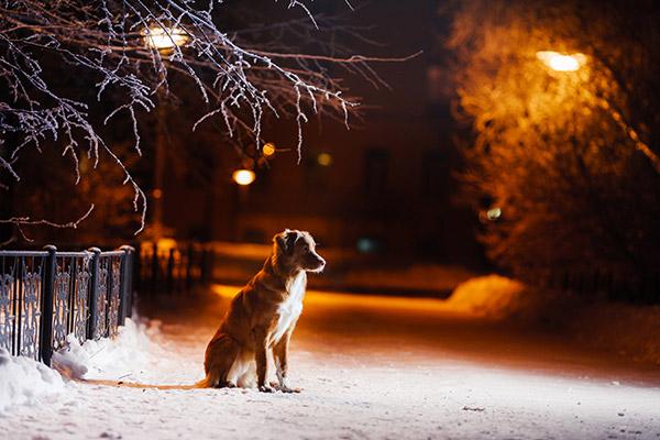 Szilveszteri tippek - elveszett kutya